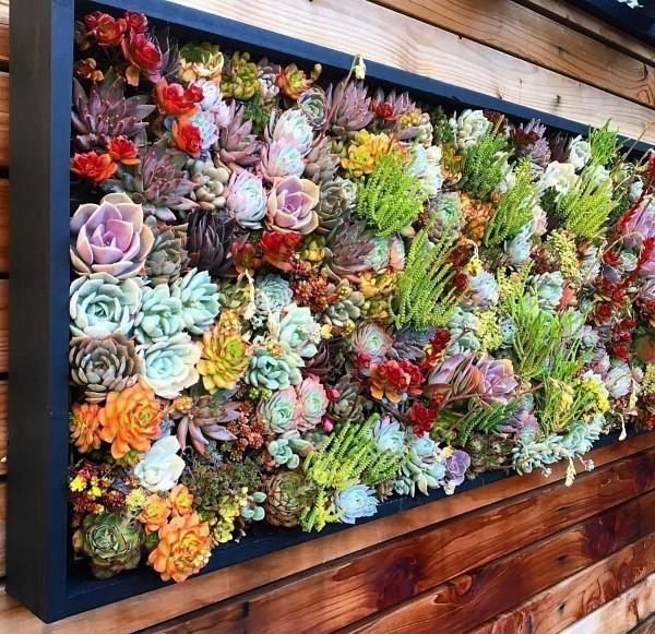 Succulent Vertical  Garden Wall