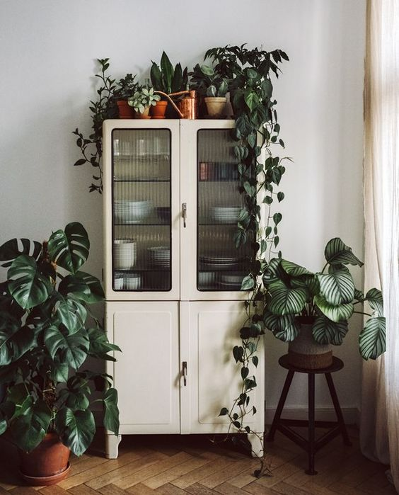 Ideas para decorar con plantas