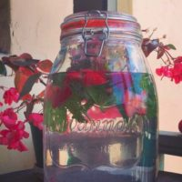 Mint Strawberry Water Infusion