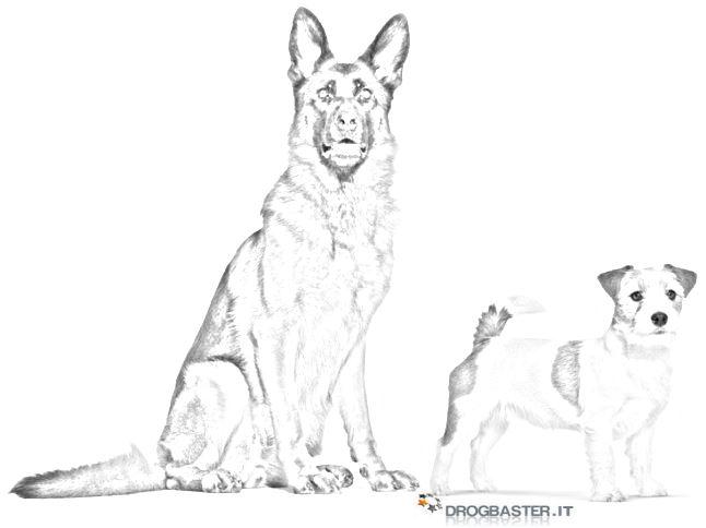 Amato Cani disegni da stampare e colorare - JN35