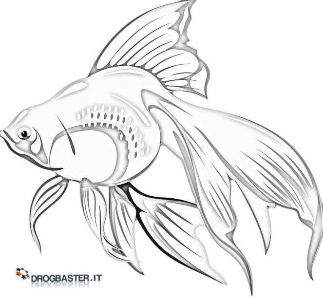 Pesci disegni da stampare e colorare for Immagini da colorare di pesci