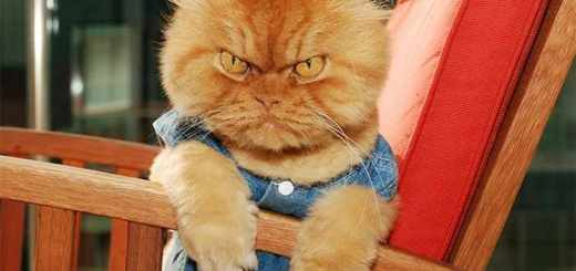 angry-cats-20