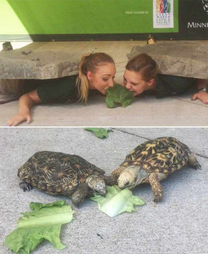 16 Funny Pictures of Zookeepers as Animals Will Make Your Day -07