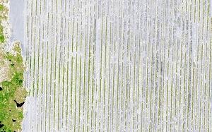 area-vegetata-e1517607029489 Fotogrammetria