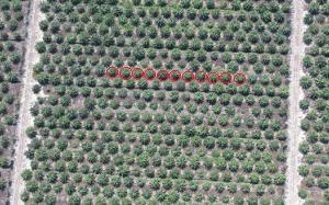 conteggio-piante-e1517606869532 Fotogrammetria