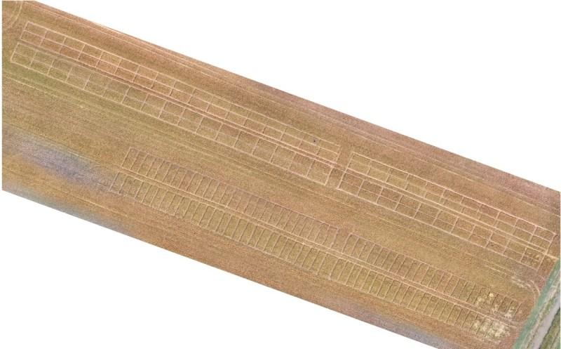 grano-rgb-800x497 Agri2000