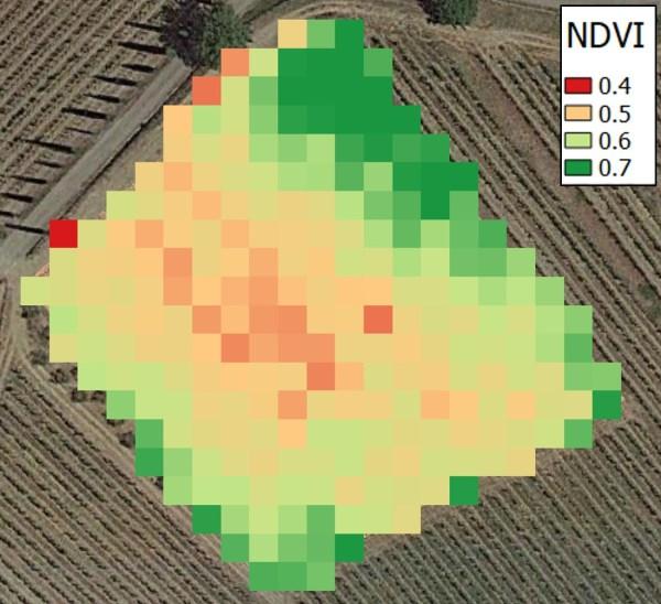 mappa-ndvi-discretizzata-vigneto-600x548 Indice NDVI in Viticoltura