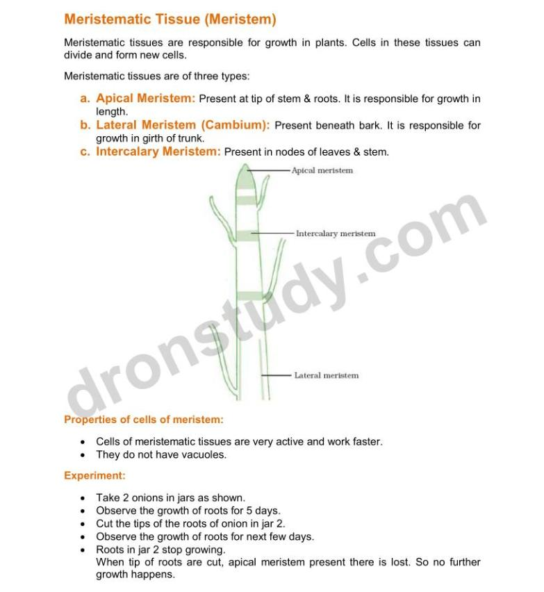 Tissues : Chapter Notes - DronStudy com