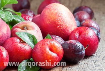Colorful plums and peaches, still life, selective focus