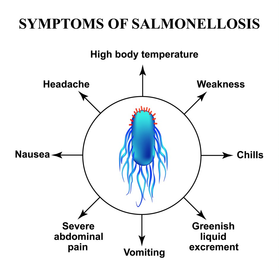 symptoms of salmonella infection