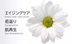 エイジングケア・若返り・肌再生