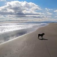 海岸で散歩