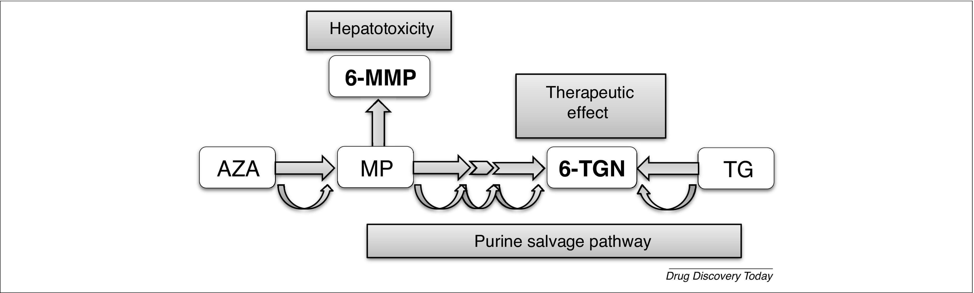 Figure 2. Simplified metabolic pathway of thiopurines.