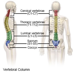 coccyx injury what you need to know