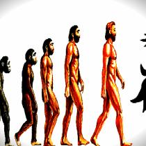 EvolutionC-1