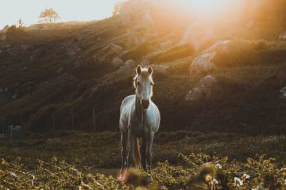 Spirituelles Krafttier Pferd