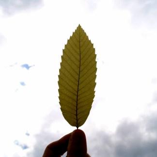 Kastanienblatt im Licht