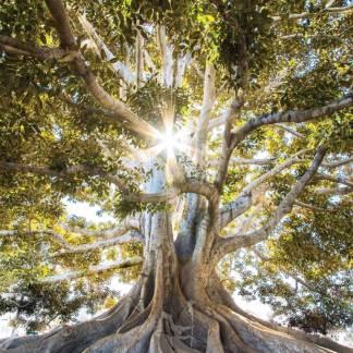 Baum des Lebens Poster