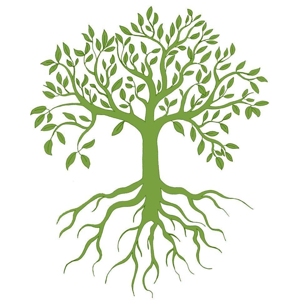 méditation druidique arbre de lumière