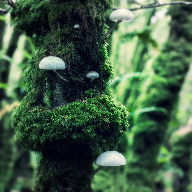 équinoxe d'automne champignons