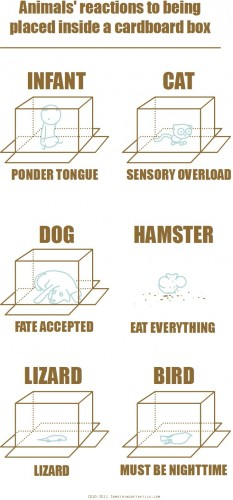 animals reactions to being placed inside a cardboard box 233x500 animals reactions to being placed inside a cardboard box