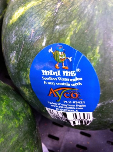 seedless watermelon may contain seeds 373x500 seedless watermelon may contain seeds