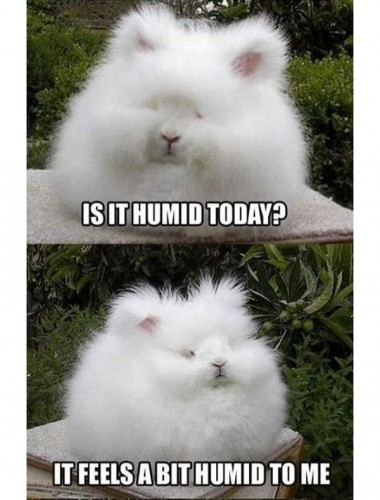 is it humid today 380x500 is it humid today