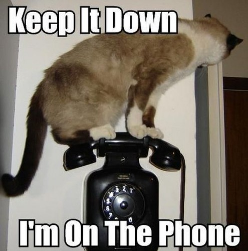cat on the phone 495x500 cat on the phone