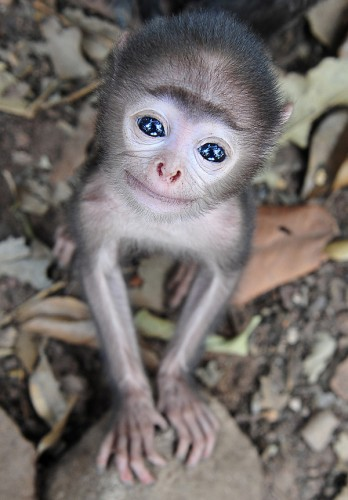 glassey eyed monkey 348x500 glassey eyed monkey