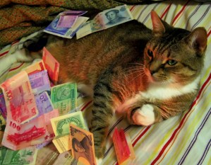 money cat (25).jpg