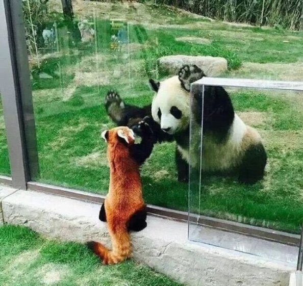 pandas of a different name pandas of a different name