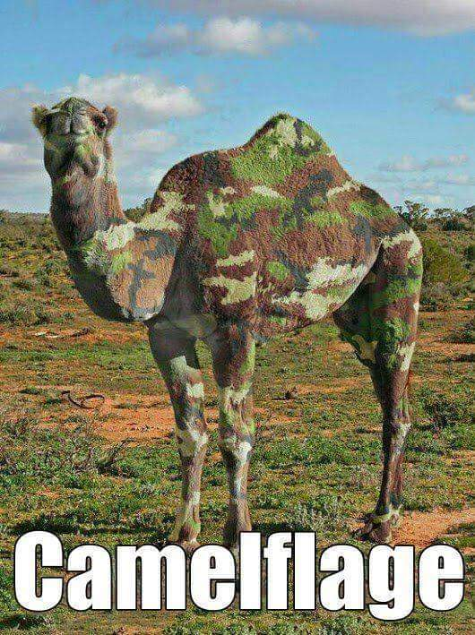 Camelflage Camelflage