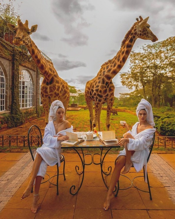 giraffee breakfast guests