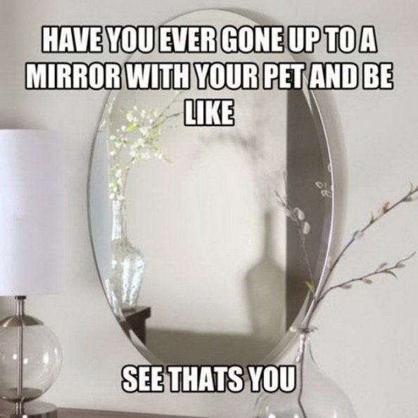 pets in the mirror pets in the mirror