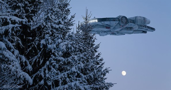 Falcon Over Snow Forest