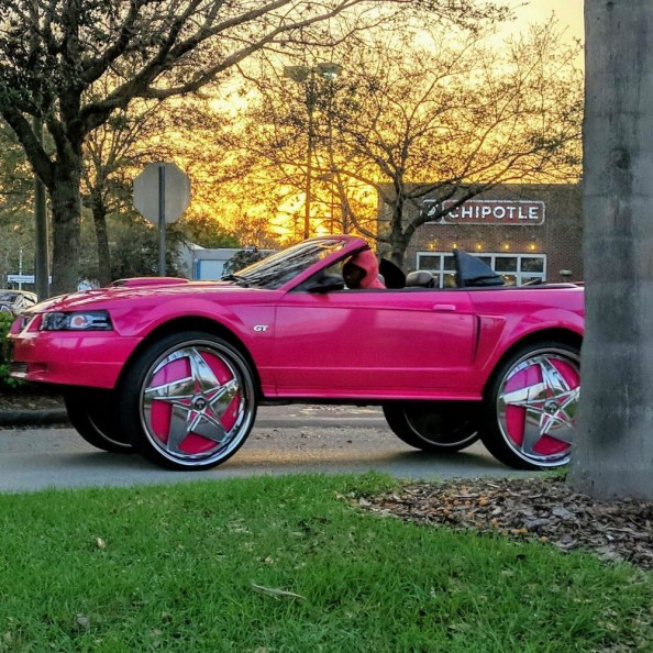 pink whip pink whip