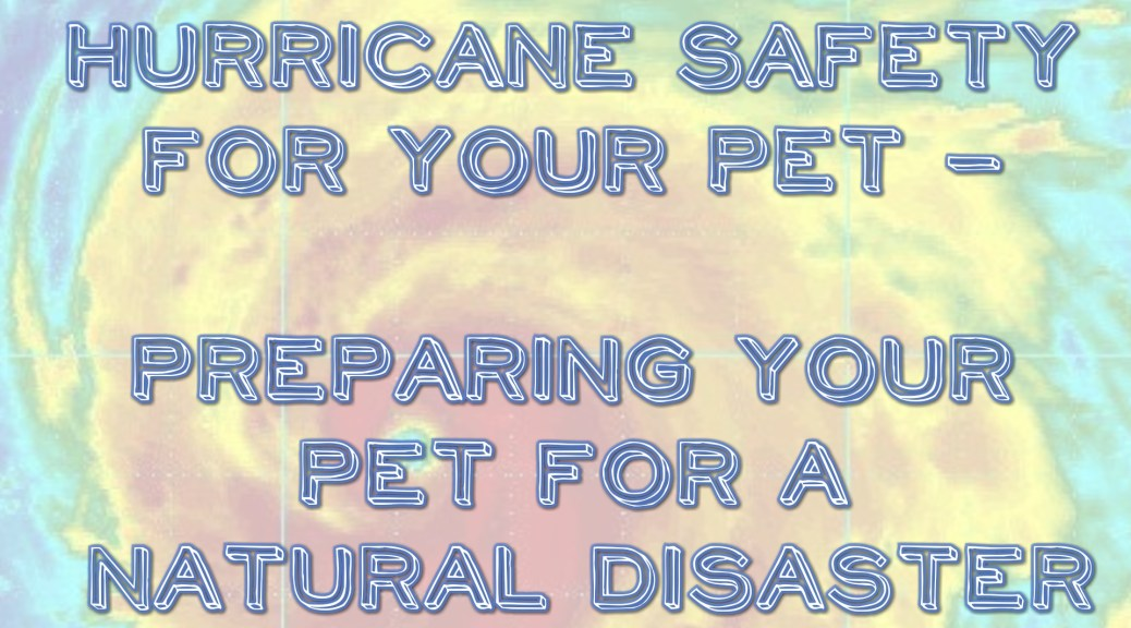 pet hurricane safety
