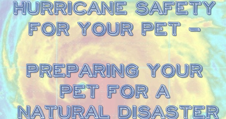 Hurricane safety for your pet – preparing your pet for a natural disaster