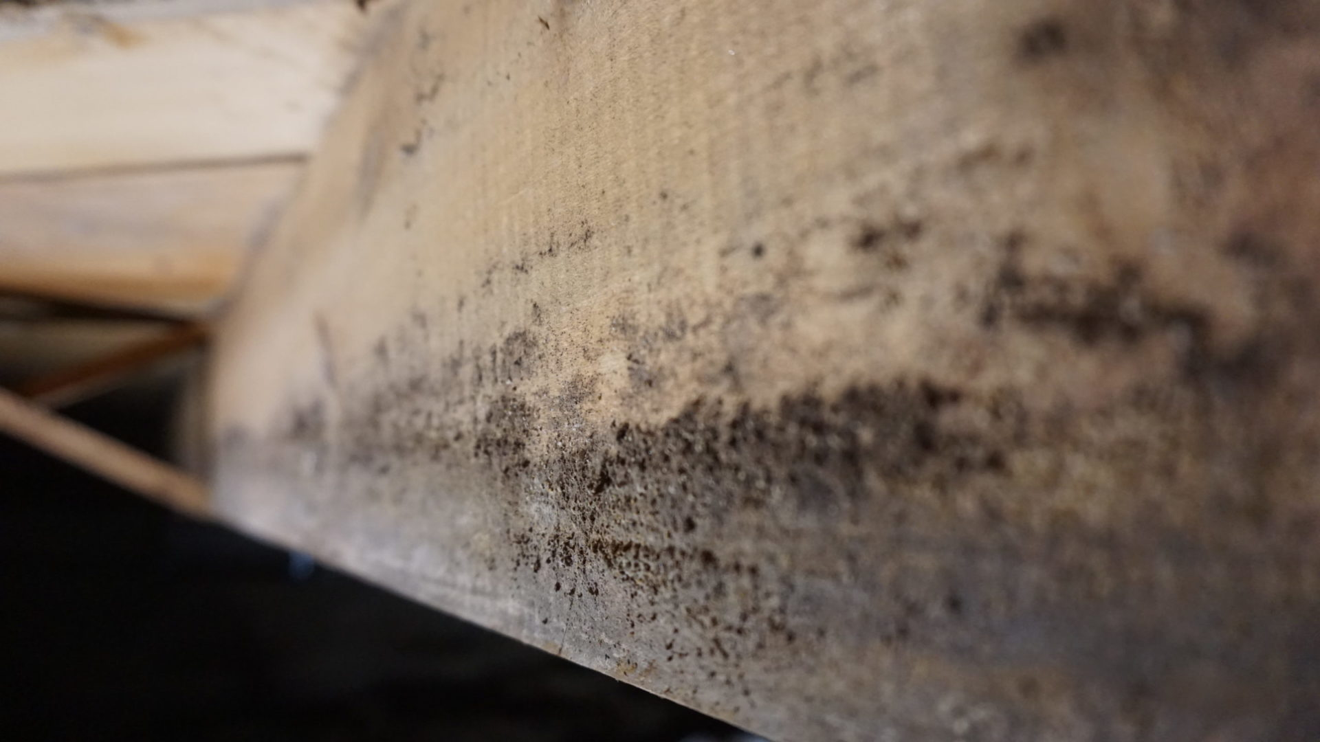 Mold in crawl space on wooden beams closeup