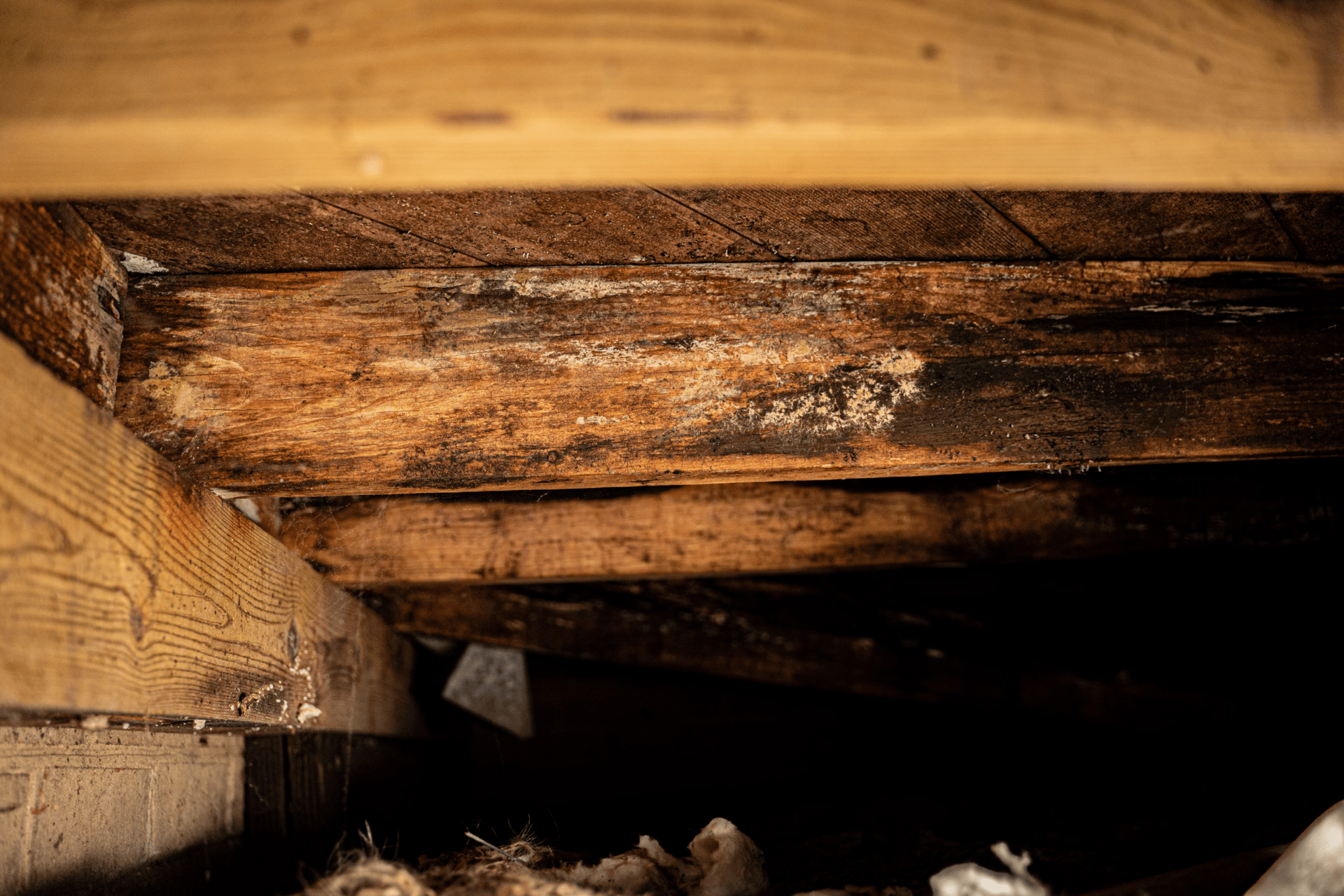 rotten crawl space beams