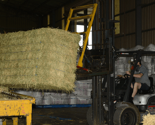 Getting the bale ready to cut