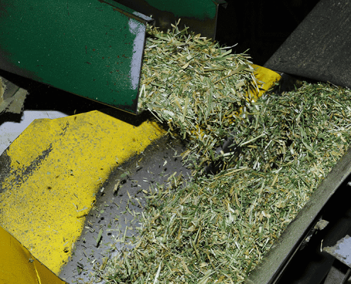 Lucerne being processed