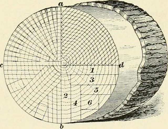 Stolarka - drzwi wewnetrzne i zewnetrzne na wymiar