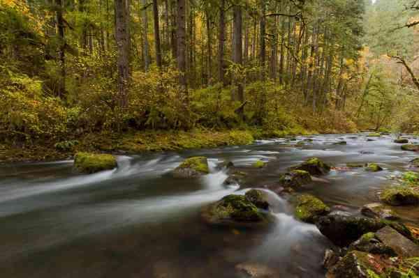 Autumn on Silver Creek