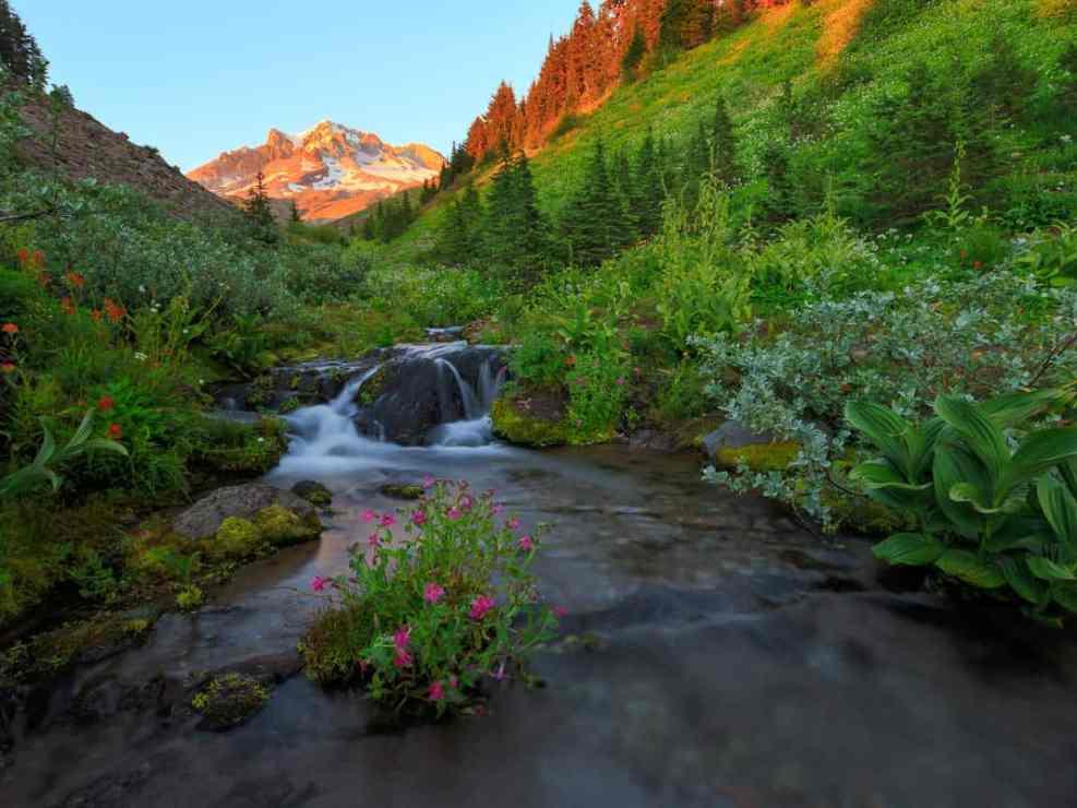 Lost Creek Wildflowers