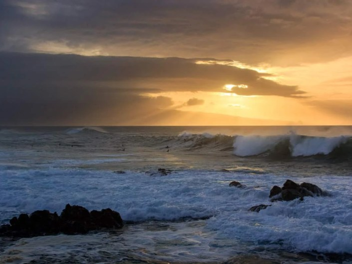 Maui Rays