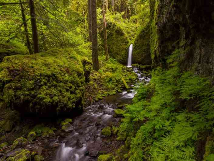 Mossy Grotto