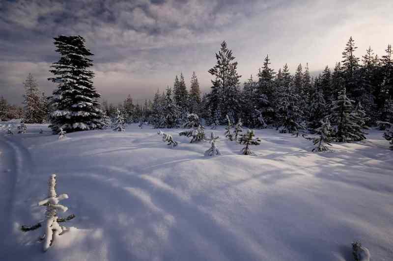 November Snow
