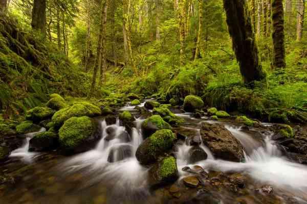 Ruckel Creek