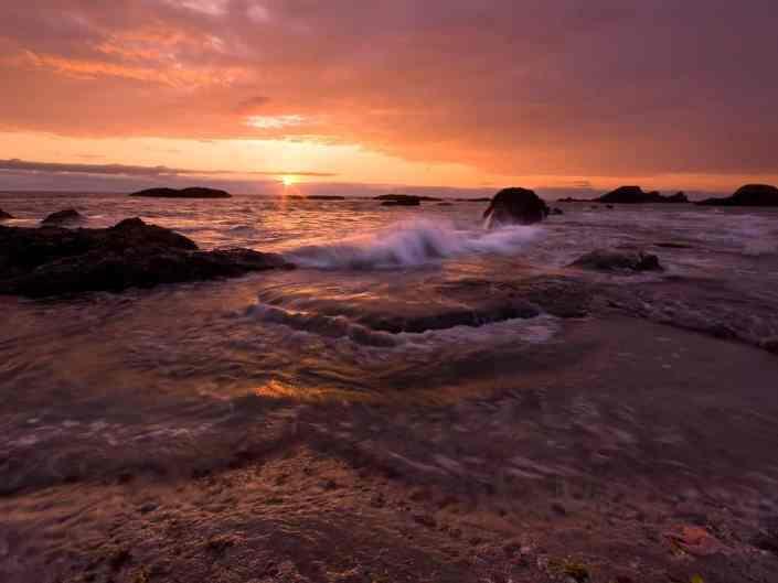 Seal Rock Starfish